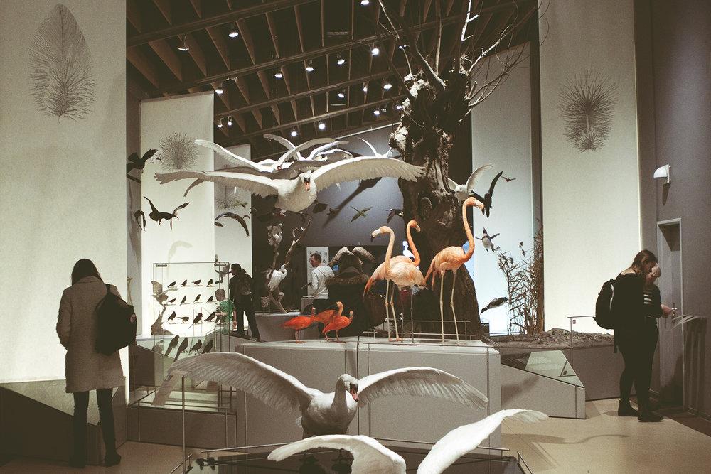 ZoologiskMuseum-Agency.idoart.dk-011.jpg