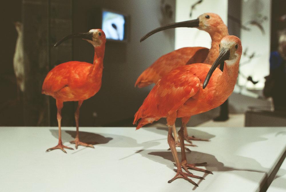 ZoologiskMuseum-Agency.idoart.dk-019.jpg
