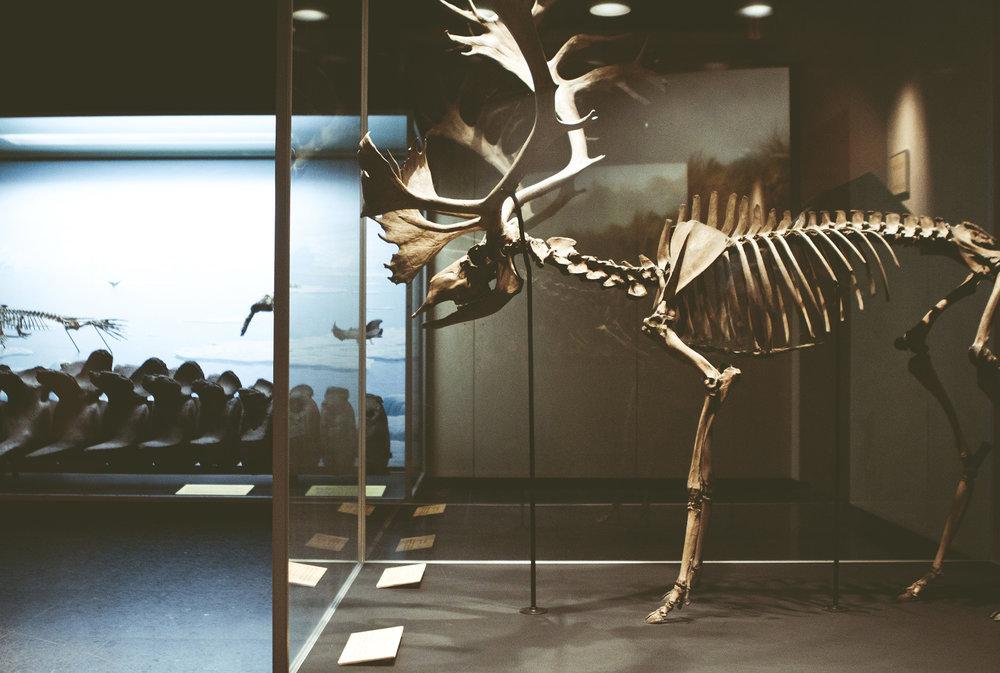 ZoologiskMuseum-Agency.idoart.dk-063.jpg