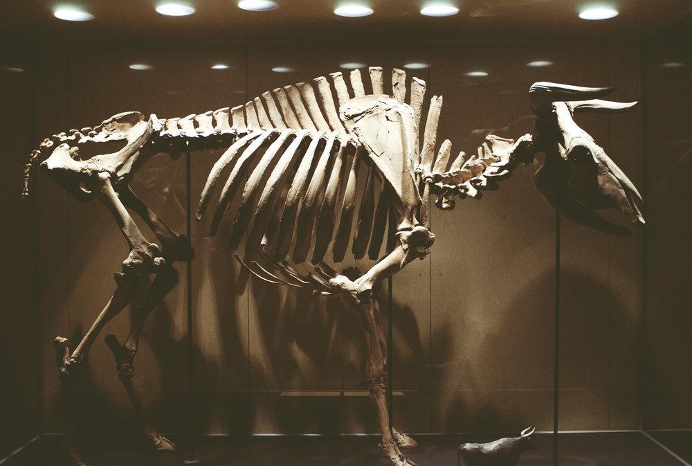 ZoologiskMuseum-Agency.idoart.dk-083.jpg