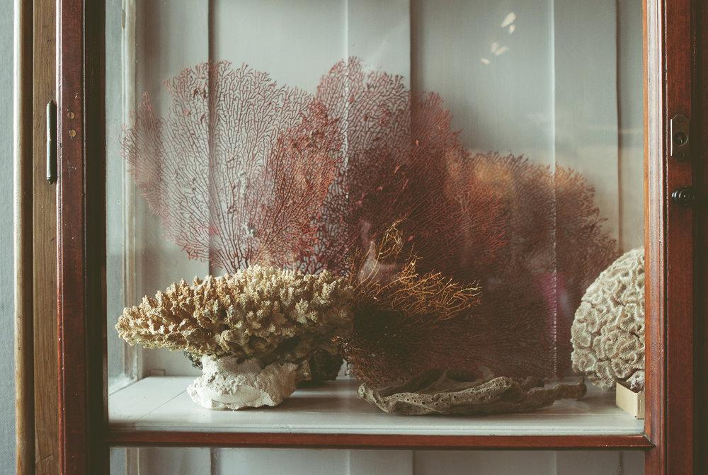 ZoologiskMuseum-Agency.idoart.dk-094.jpg
