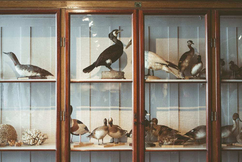 ZoologiskMuseum-Agency.idoart.dk-100.jpg