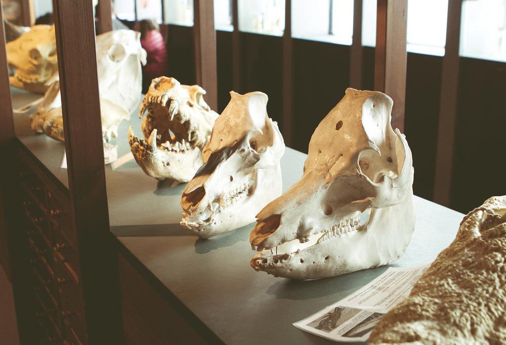 ZoologiskMuseum-Agency.idoart.dk-101.jpg