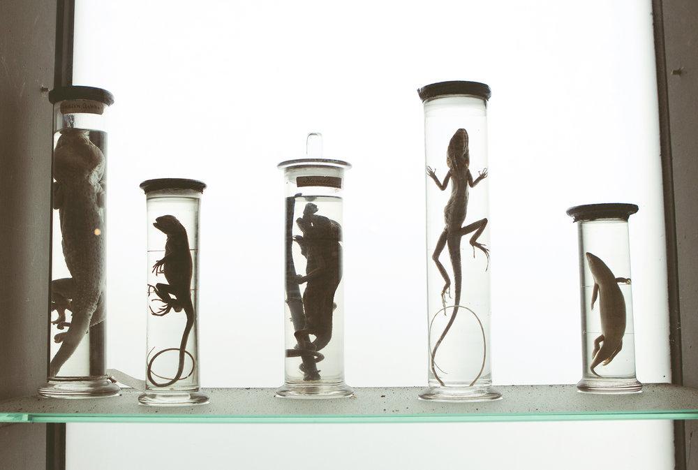 ZoologiskMuseum-Agency.idoart.dk-105.jpg