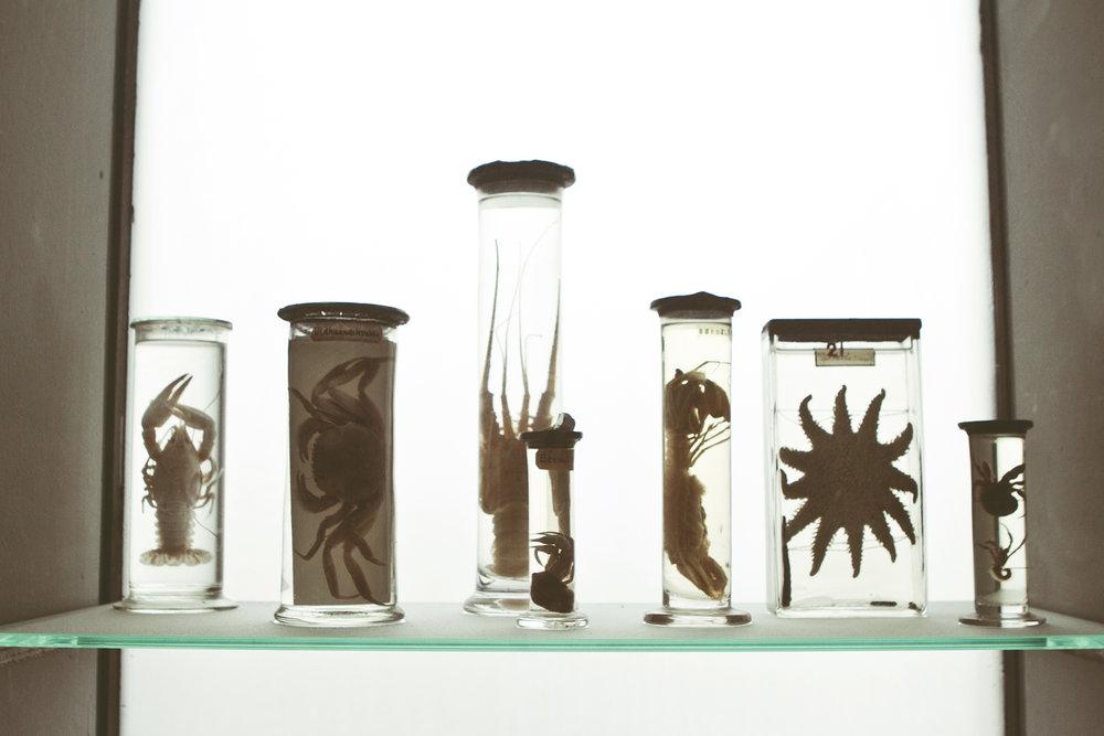 ZoologiskMuseum-Agency.idoart.dk-113.jpg