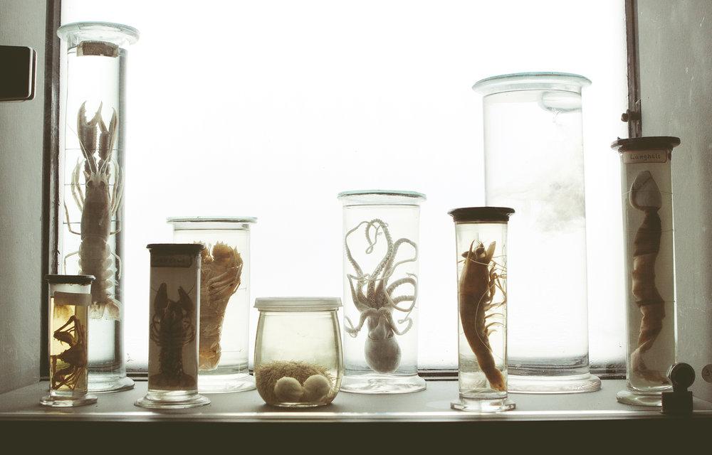 ZoologiskMuseum-Agency.idoart.dk-114.jpg