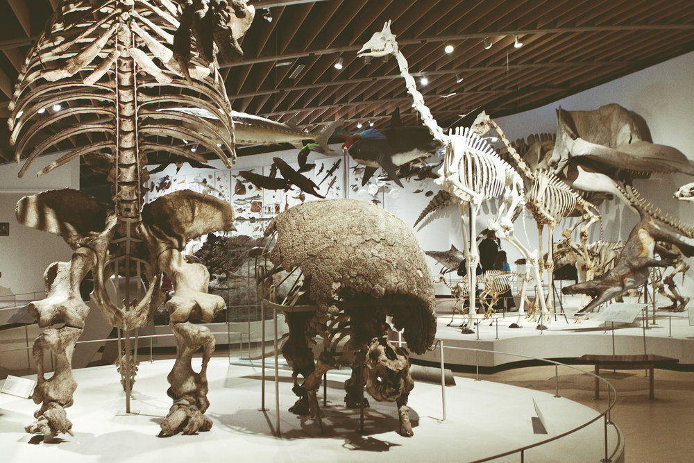 ZoologiskMuseum-Agency.idoart.dk-130.jpg