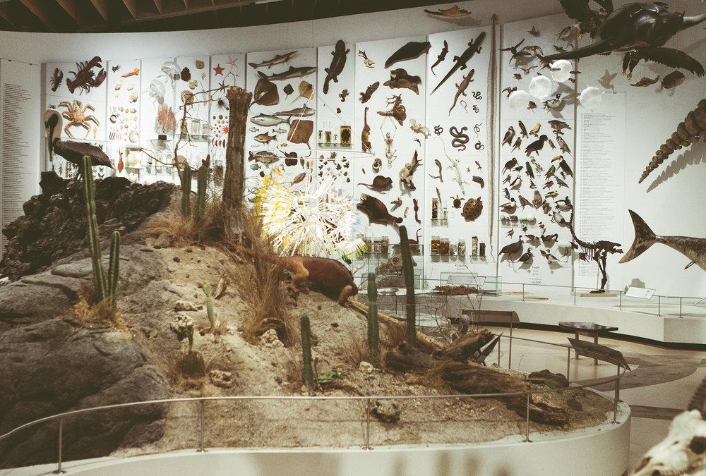 ZoologiskMuseum-Agency.idoart.dk-132.jpg