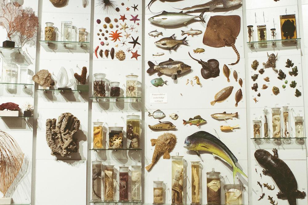 ZoologiskMuseum-Agency.idoart.dk-135.jpg