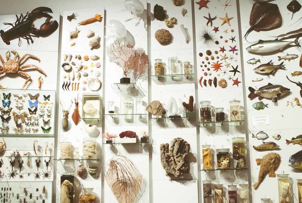 ZoologiskMuseum-Agency.idoart.dk-136.jpg