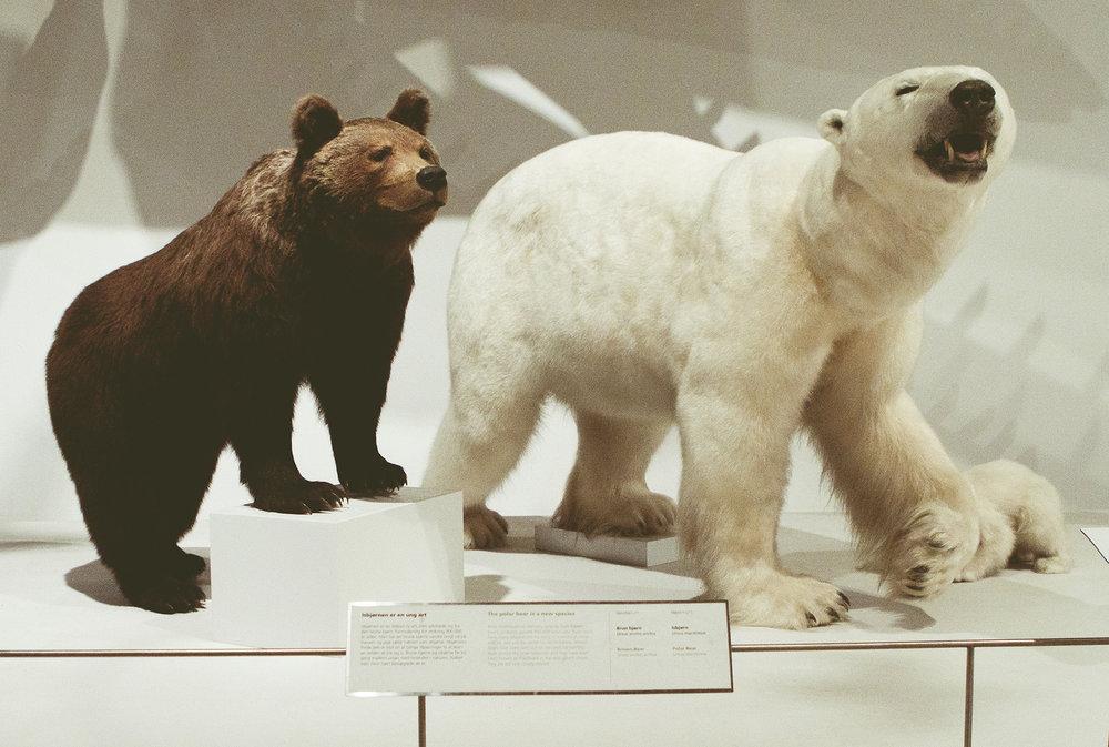 ZoologiskMuseum-Agency.idoart.dk-156.jpg