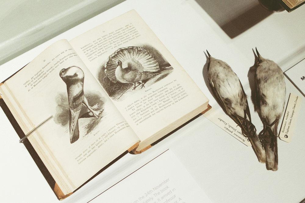 ZoologiskMuseum-Agency.idoart.dk-158.jpg