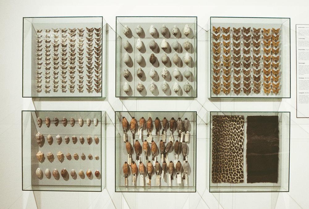 ZoologiskMuseum-Agency.idoart.dk-161.jpg