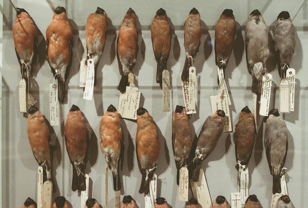 ZoologiskMuseum-Agency.idoart.dk-162.jpg