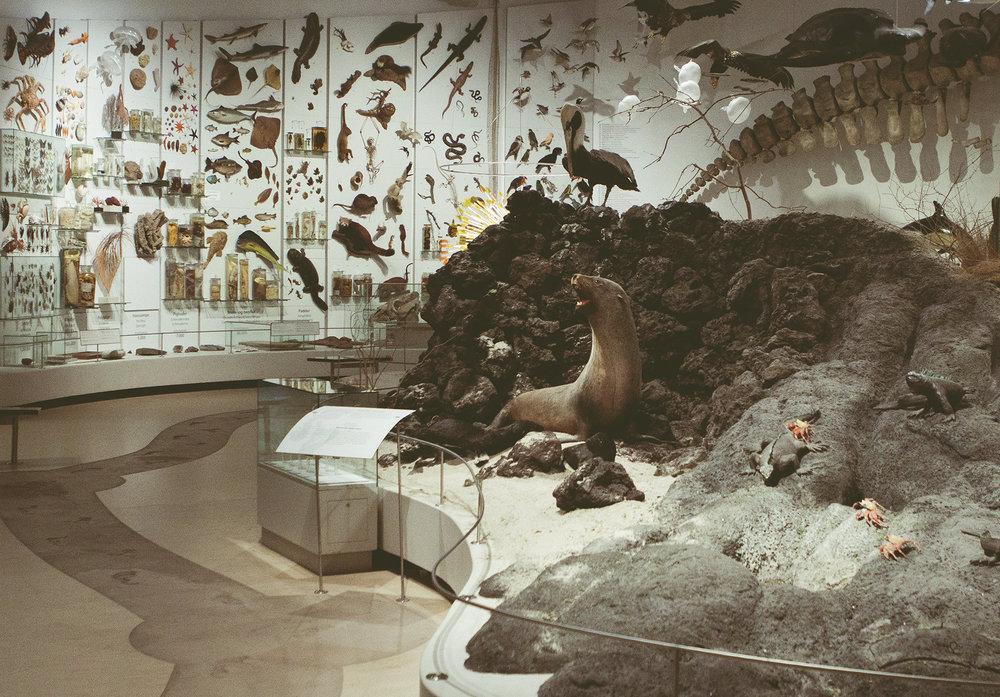 ZoologiskMuseum-Agency.idoart.dk-165.jpg