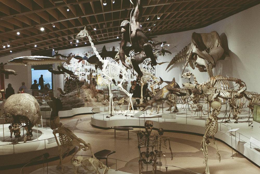 ZoologiskMuseum-Agency.idoart.dk-169.jpg