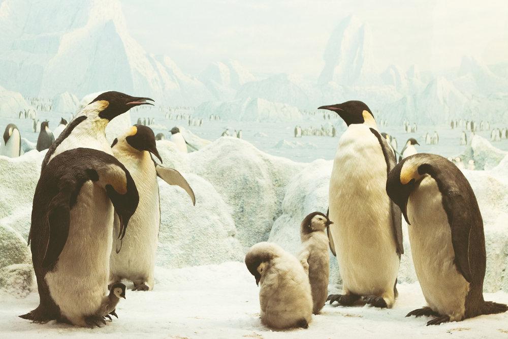 ZoologiskMuseum-Agency.idoart.dk-182.jpg