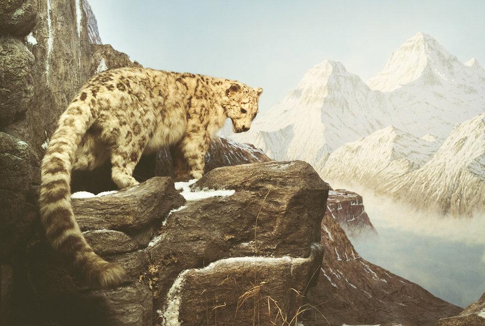 ZoologiskMuseum-Agency.idoart.dk-211.jpg