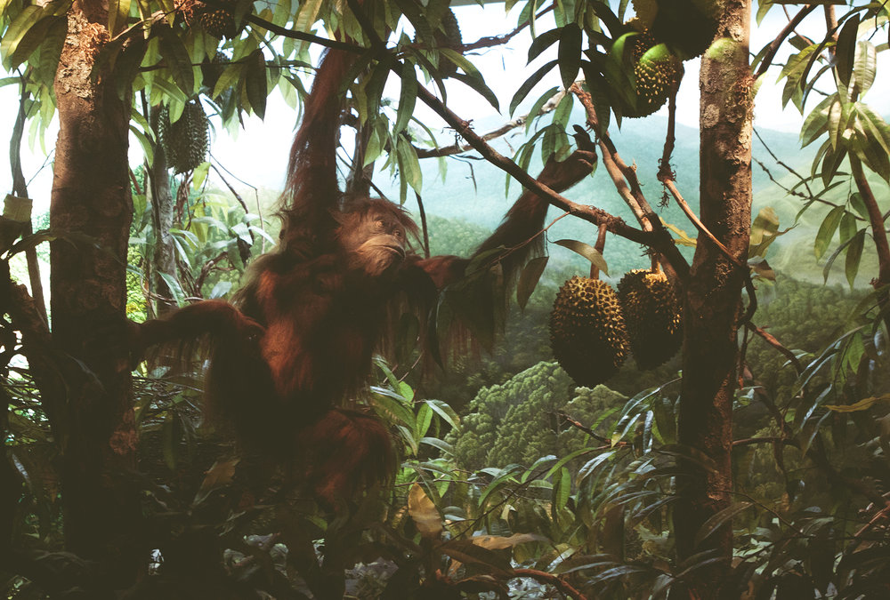 ZoologiskMuseum-Agency.idoart.dk-192.jpg