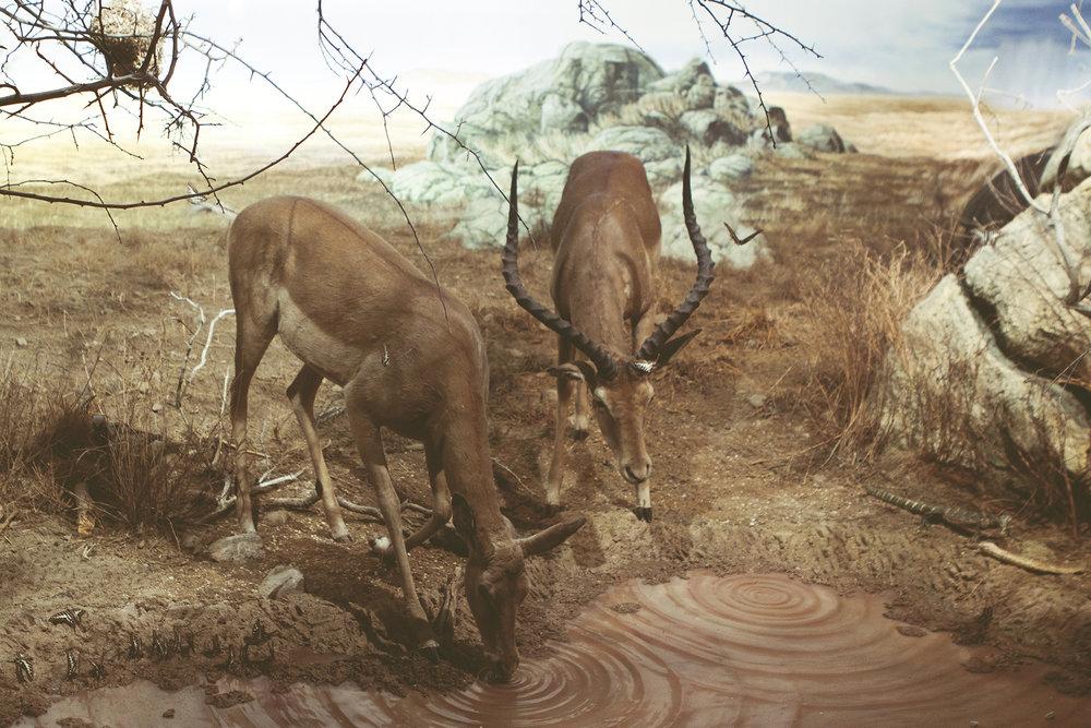 ZoologiskMuseum-Agency.idoart.dk-201.jpg