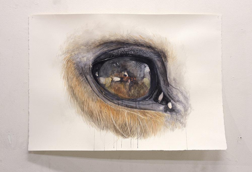 Øjet, 2018. Akvarel på papir, 80x113cm (Gengivelse af min hests ene øje). Foto: Heidi Hove.