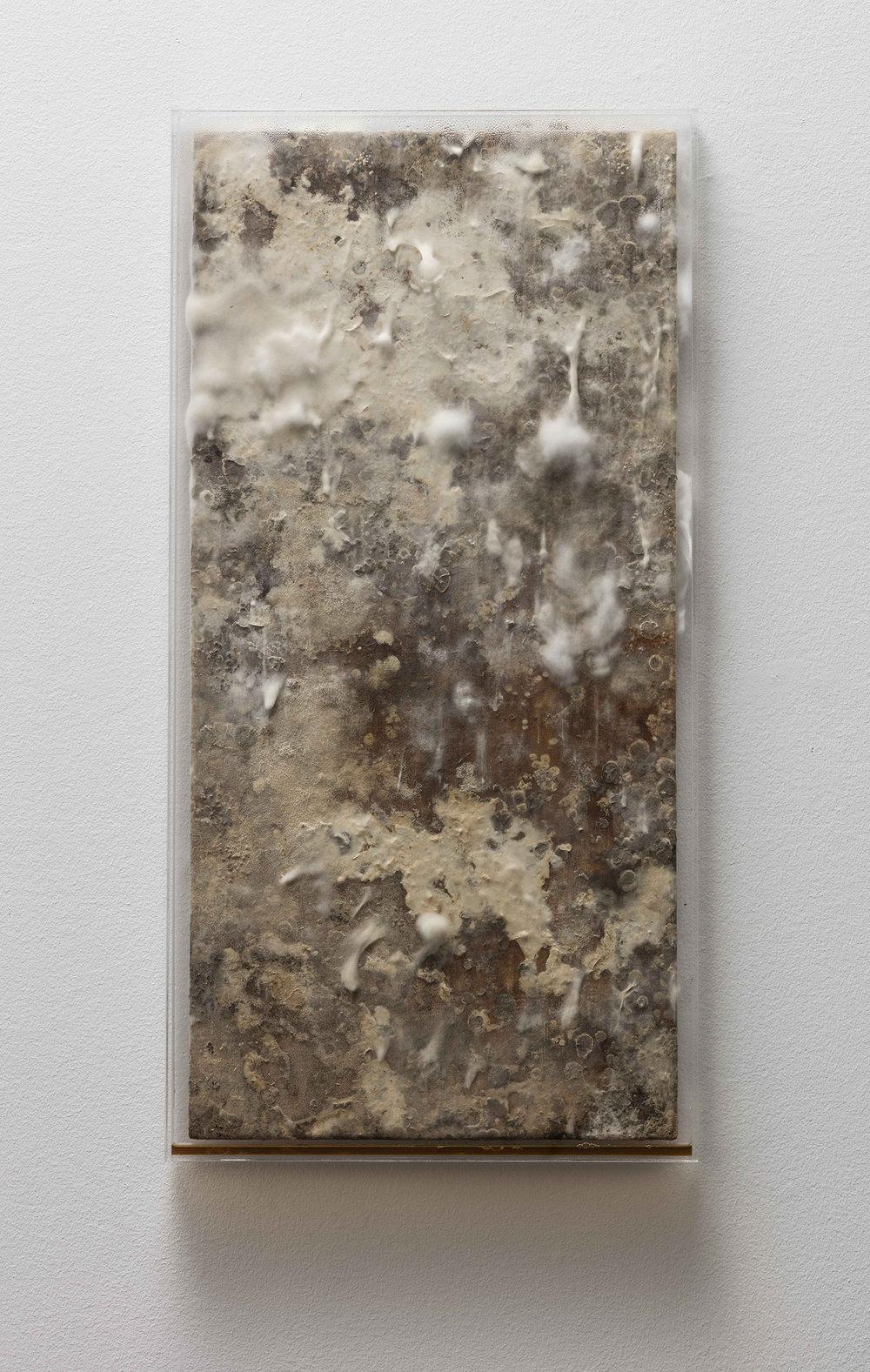 SI, Uden titel, 2017 (Skimmelsvamp på træ, hermetisk forseglet af klar akryl, med respiration på bagsiden. 100 x 50 x 6 cm). Foto:Anders Sune Berg © Galleri Susanne Ottesen.