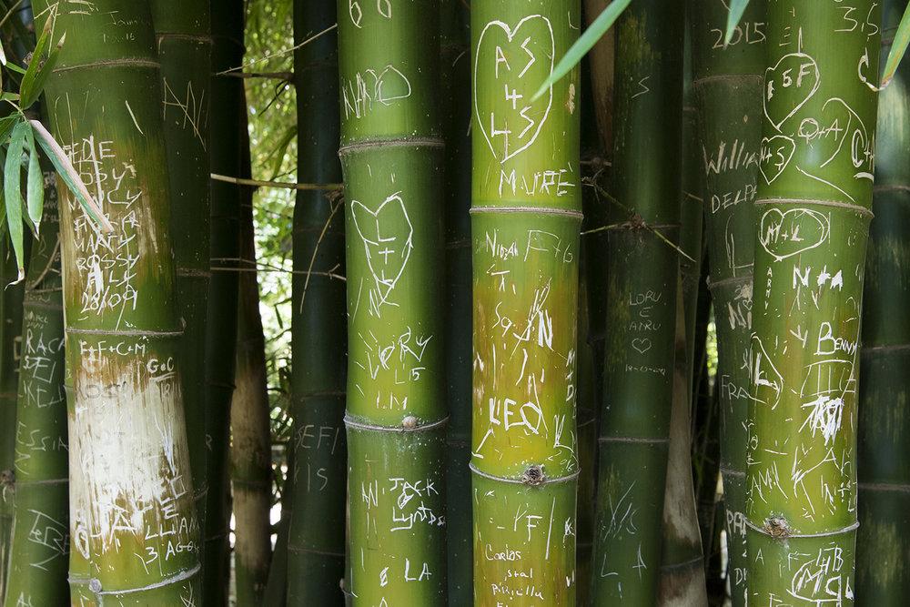 På bambustræerne har besøgende indridset beskeder og kærlighedserklæringer. Foto © I DO ART Agency.