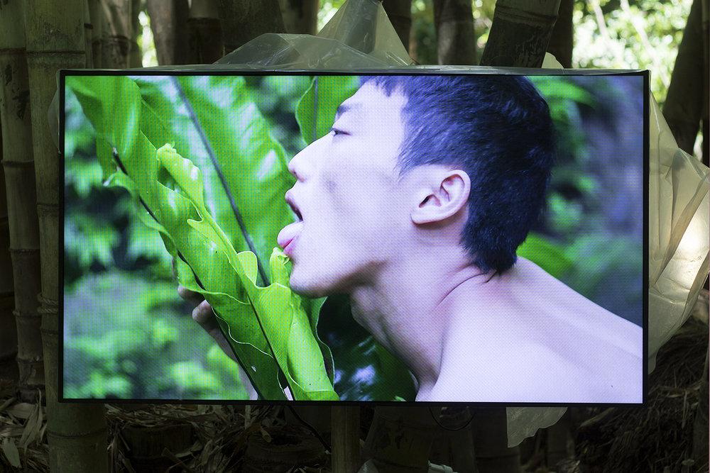 Bo Zheng, Pteridophilia. Manifesta 12. Foto © I DO ART Agency.