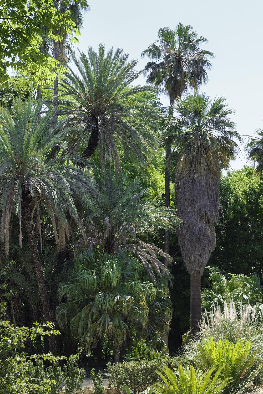 Orto Botanico, Palermo. Foto © I DO ART Agency.
