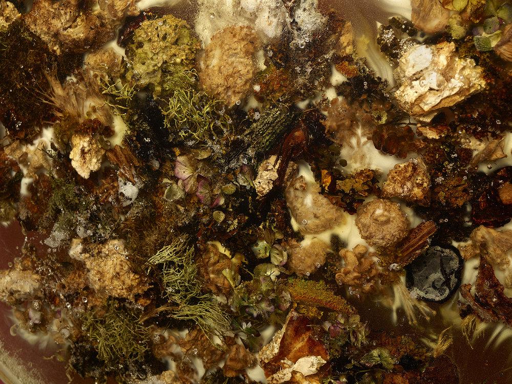 "Studio ThinkingHand ""Landscape Portrait #6,� 2018 (Epoxy, steel, mahogany, flora, fungi, seaweed.  Foraged April 2018 from Sjælland, DK. 110(ø) x 7(d) cm). Foto: Ken Hermann."