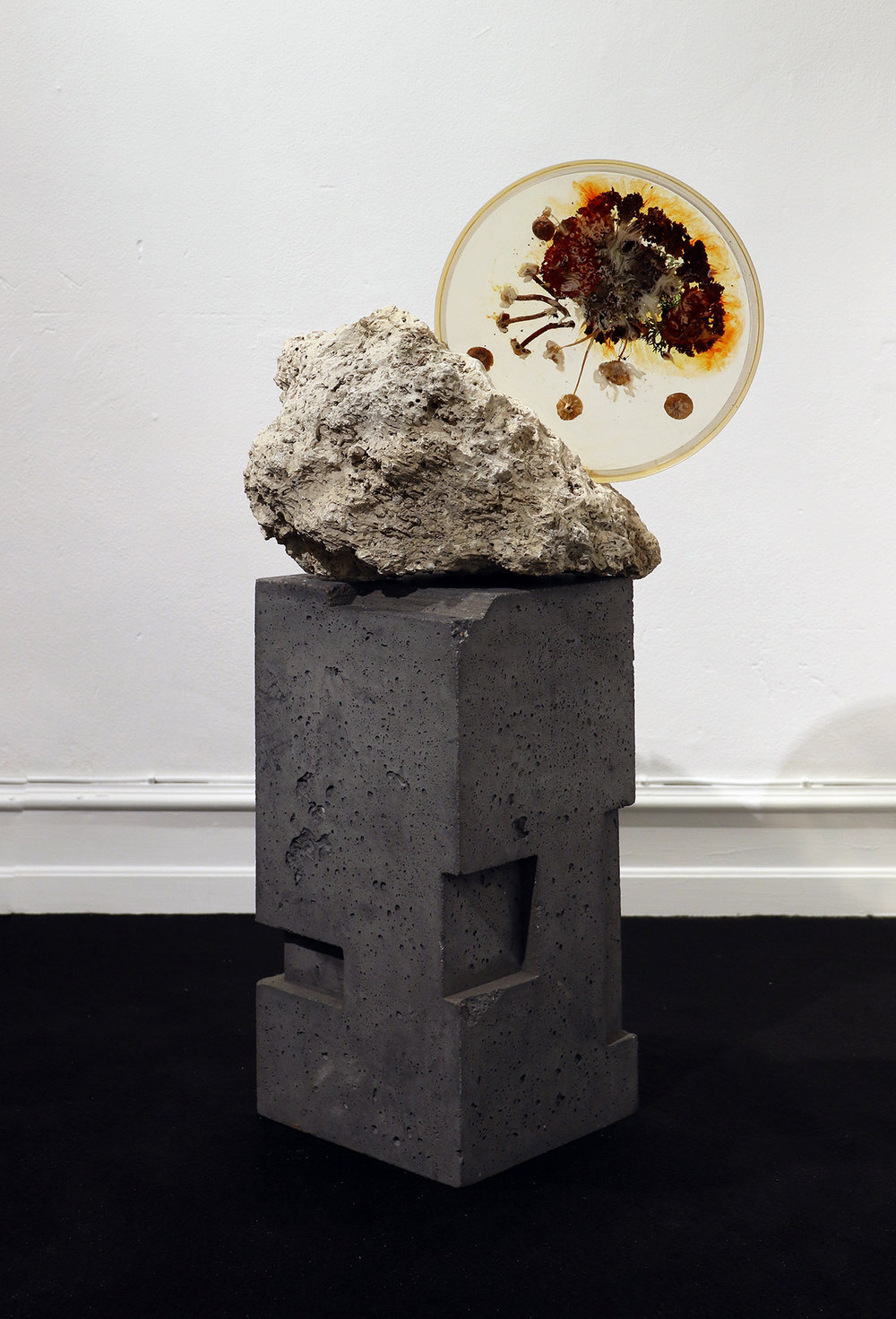 "Studio ThinkingHand ""Landscape Portrait #4,"" 2018 (Epoxy resin, limestone fossil, flora, fungi. Foraged September 2017 from Kongelunden, DK. 36(w) x 40(h) x 22(d) cm)."