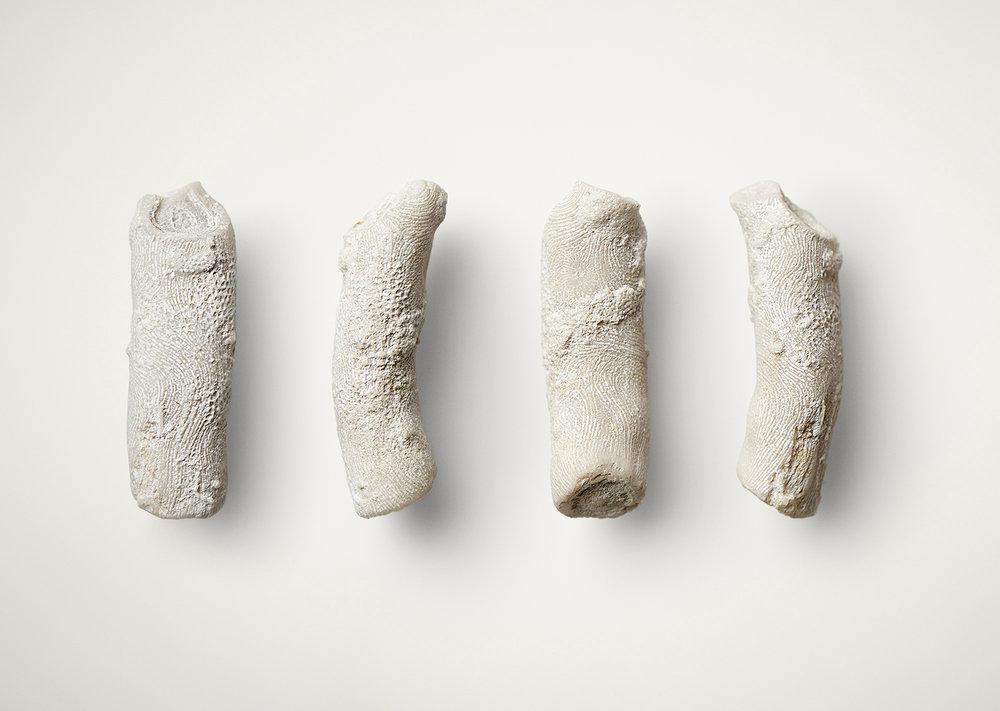 Fossiler. Foto: Lea Jessen.