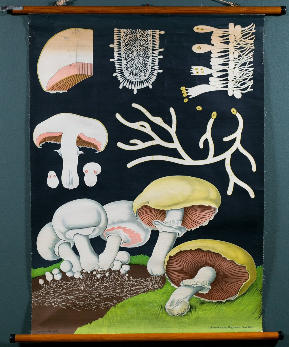 Vintage Mushrooms on Black Background Chart
