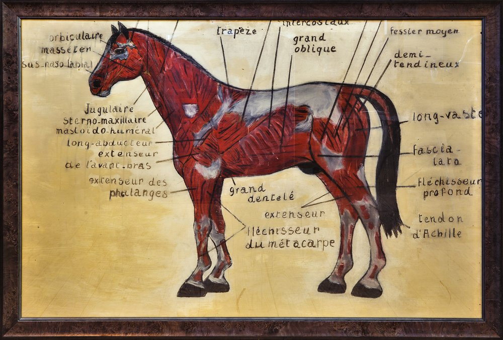 Large Hand-Painted Diagram of Horse in French, circa 1930