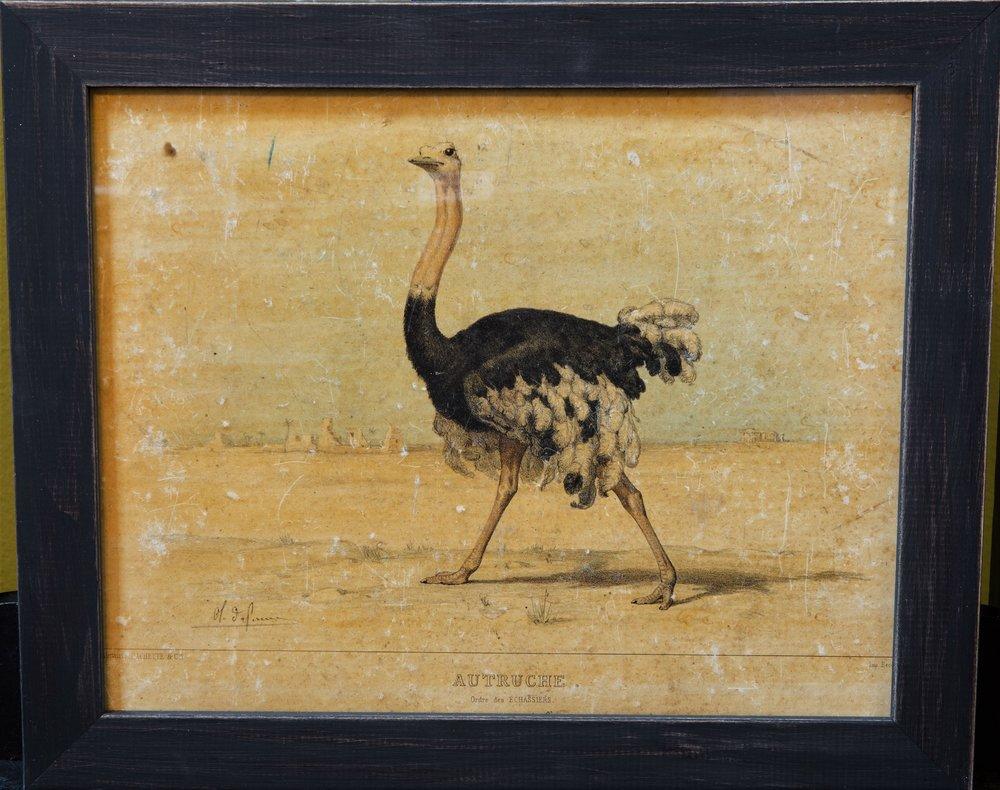 Antique Ostrich Print