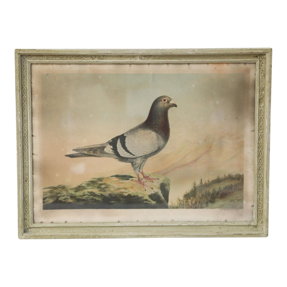 Belgian Colored Framed Pigeon Engraving
