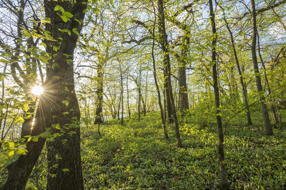 Big Woods sunset