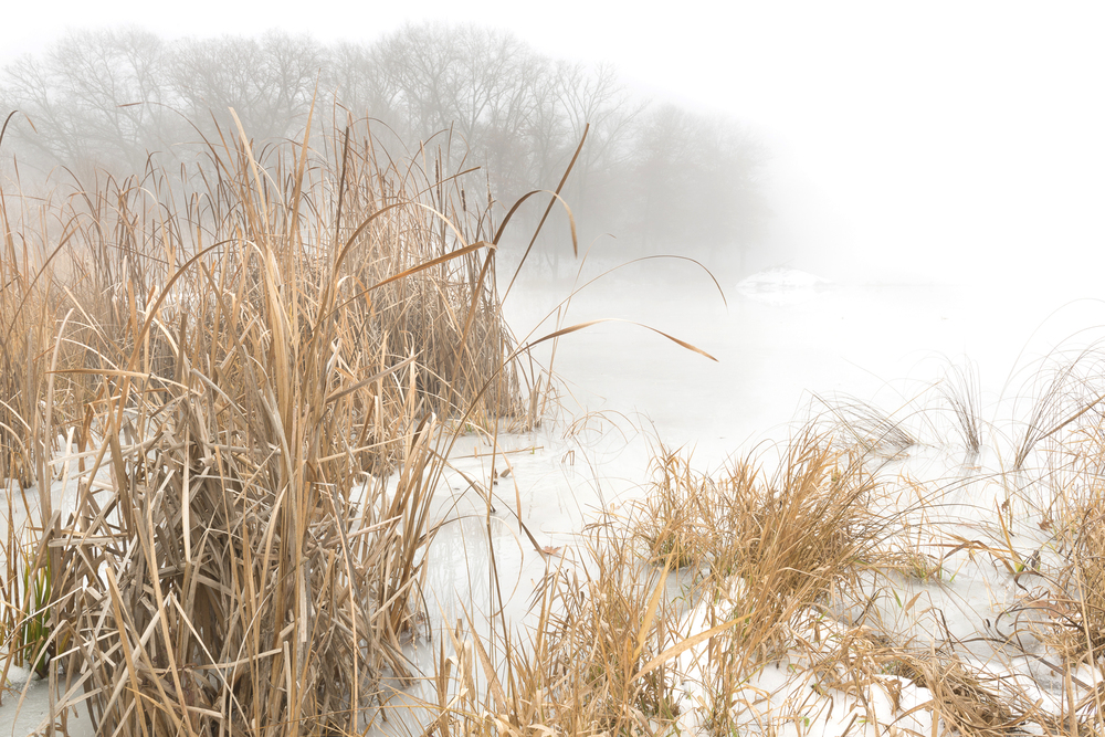 November ice on beaver pond