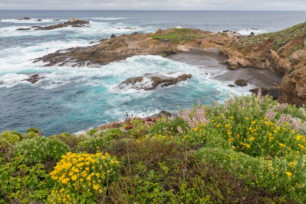 Point Lobos Nature Reserve, CA.