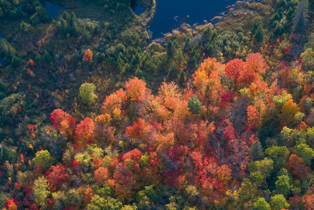 Lake County aerial: maples and aspens.