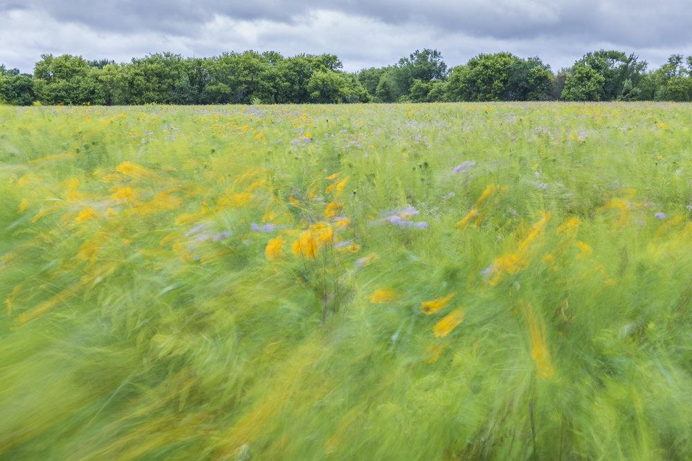 Channeling Monet: wind-blown prairie.