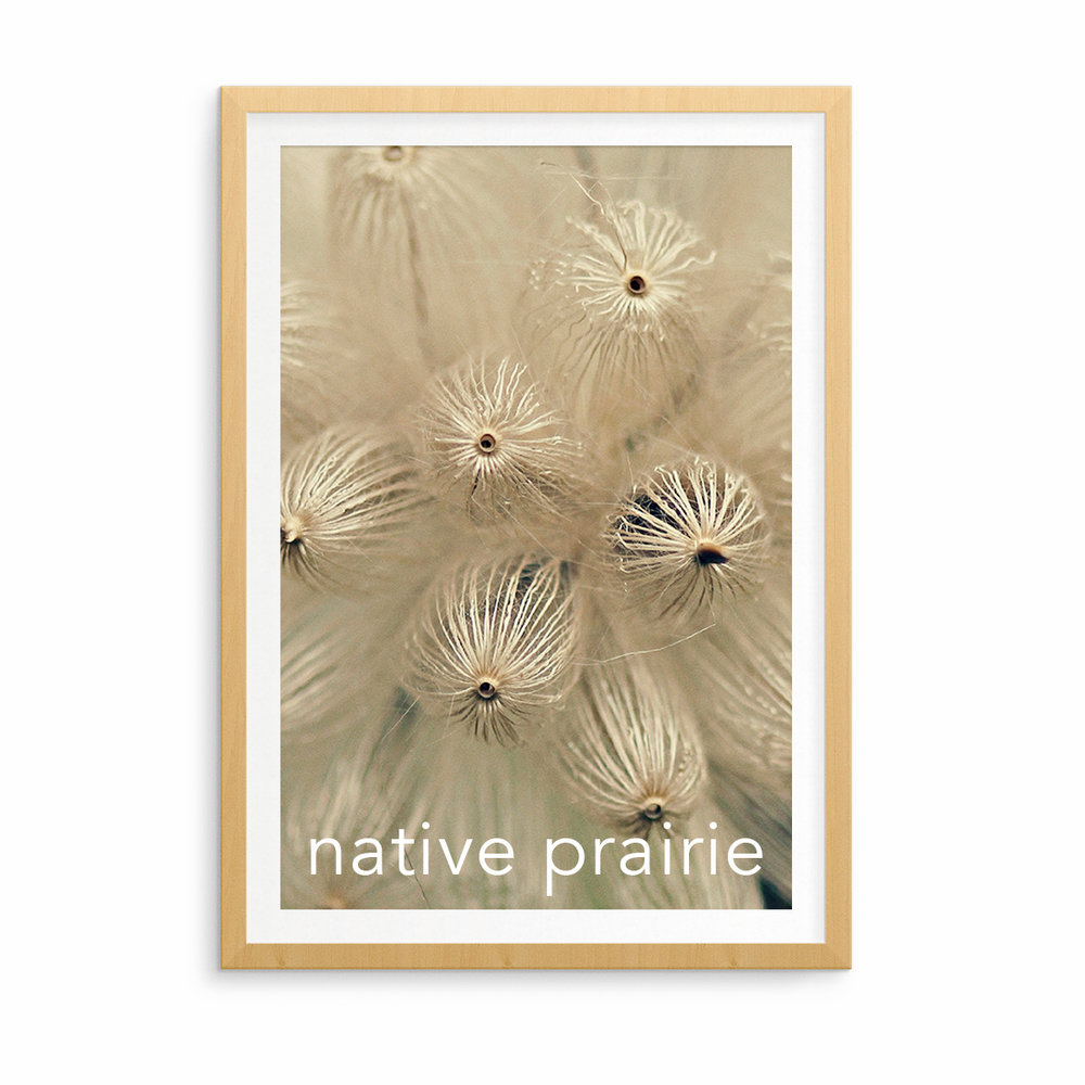 native-prairie-thumb.jpg