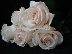White roses resized.jpg