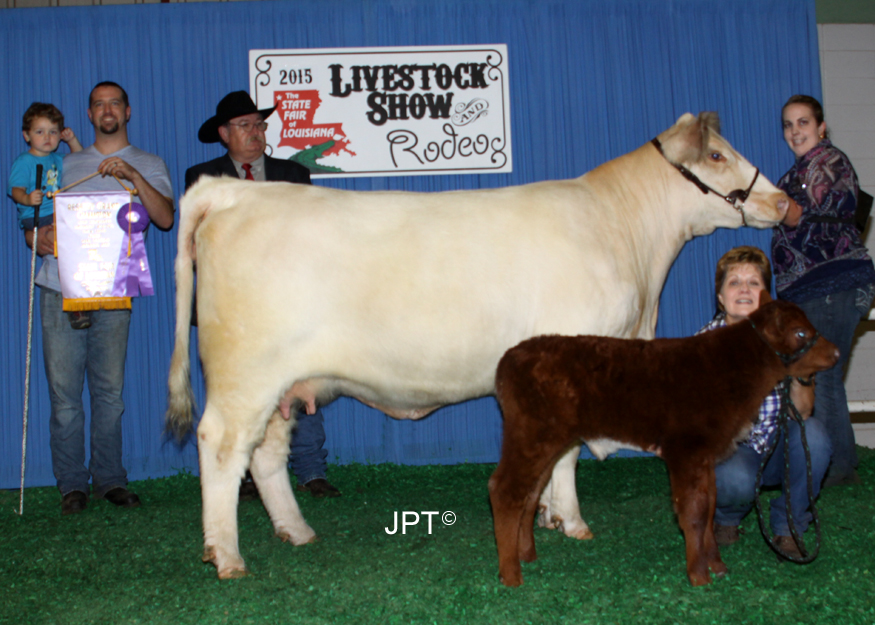 4BS Cherri Vanilla   Reserve Champion Heifer, 2015 Louisiana State Fair