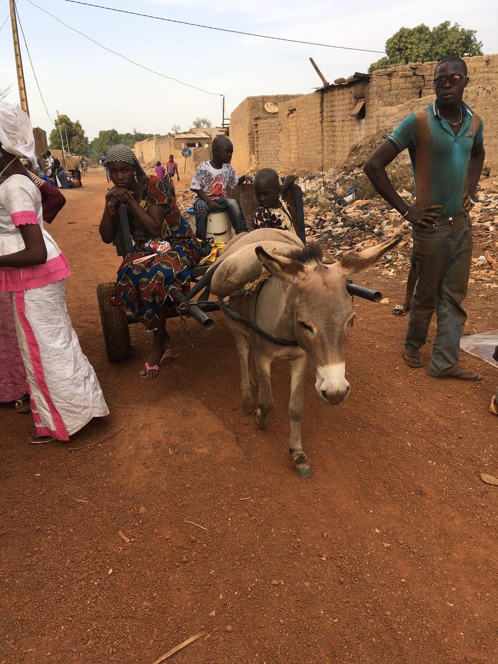 Oh the hard-working donkeys of Mali!