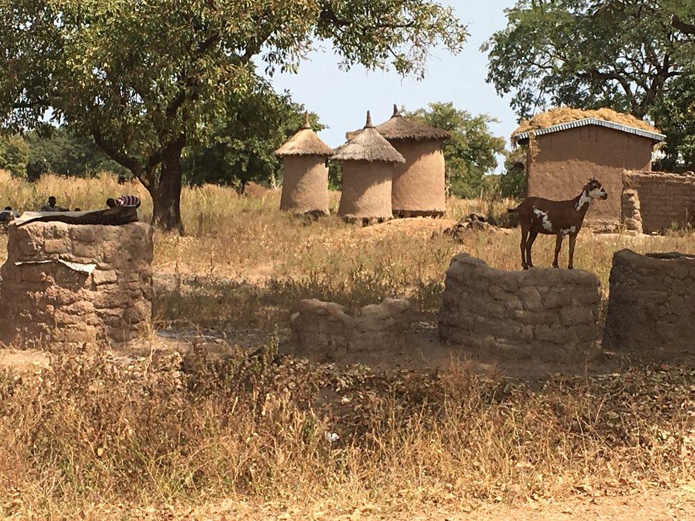 Goats rule Mali.