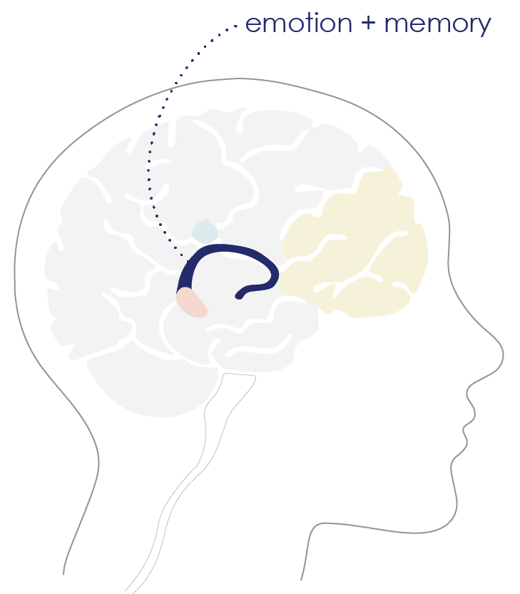 brain diagram_hippacampus.png