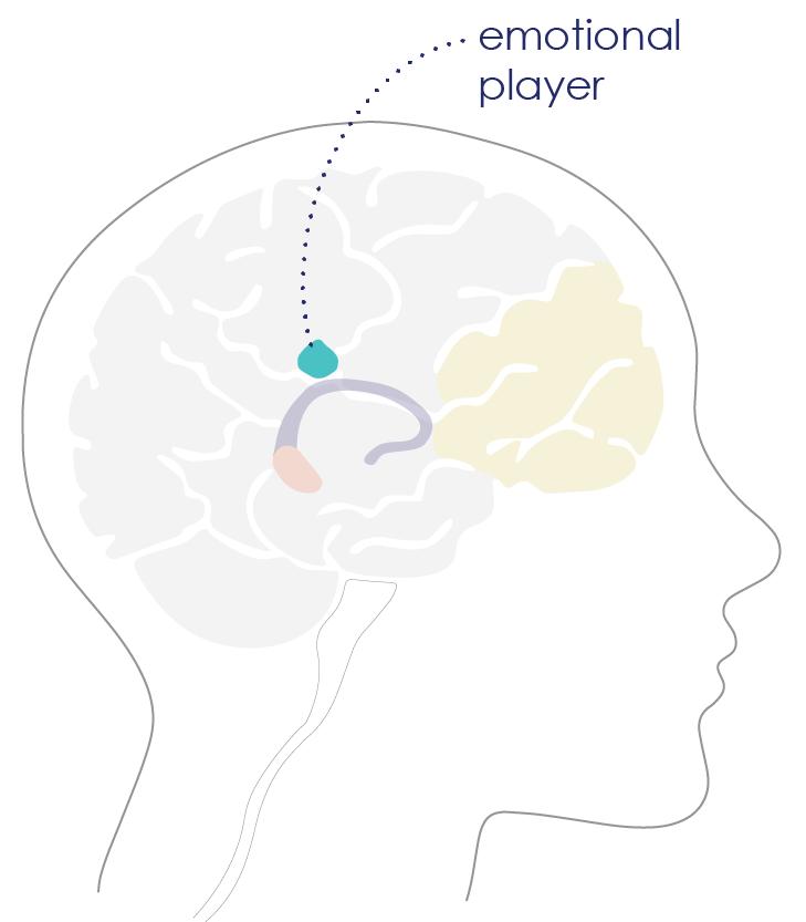 brain diagram_insula.png