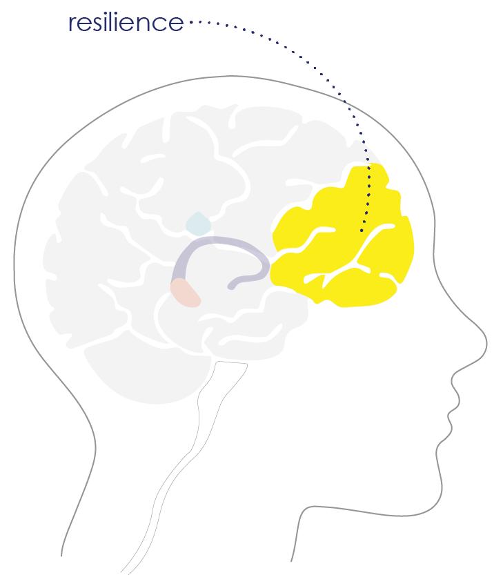 brain diagram_prefontal cortext.png