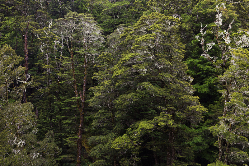 FungusTrees1LR